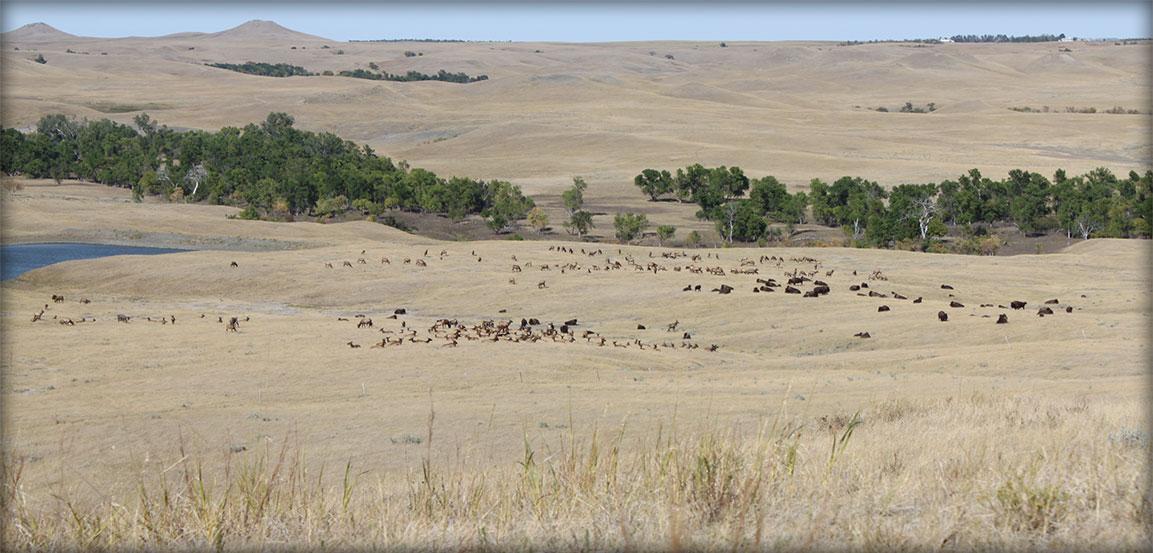 Prairie at Timber Lake Elk Ranch