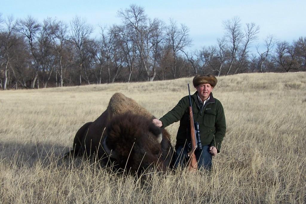 Buffalo at Timber Lake